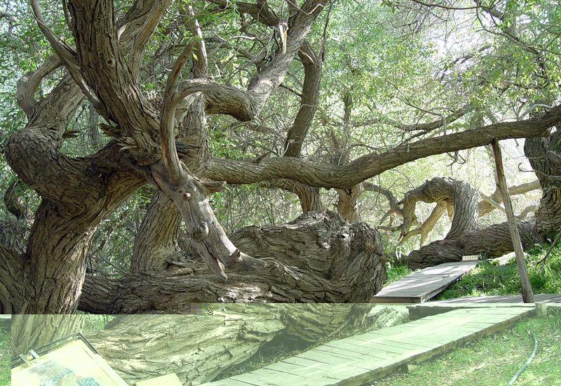 神木园旅游-神木园旅游景点-神木园图片-神木园攻略