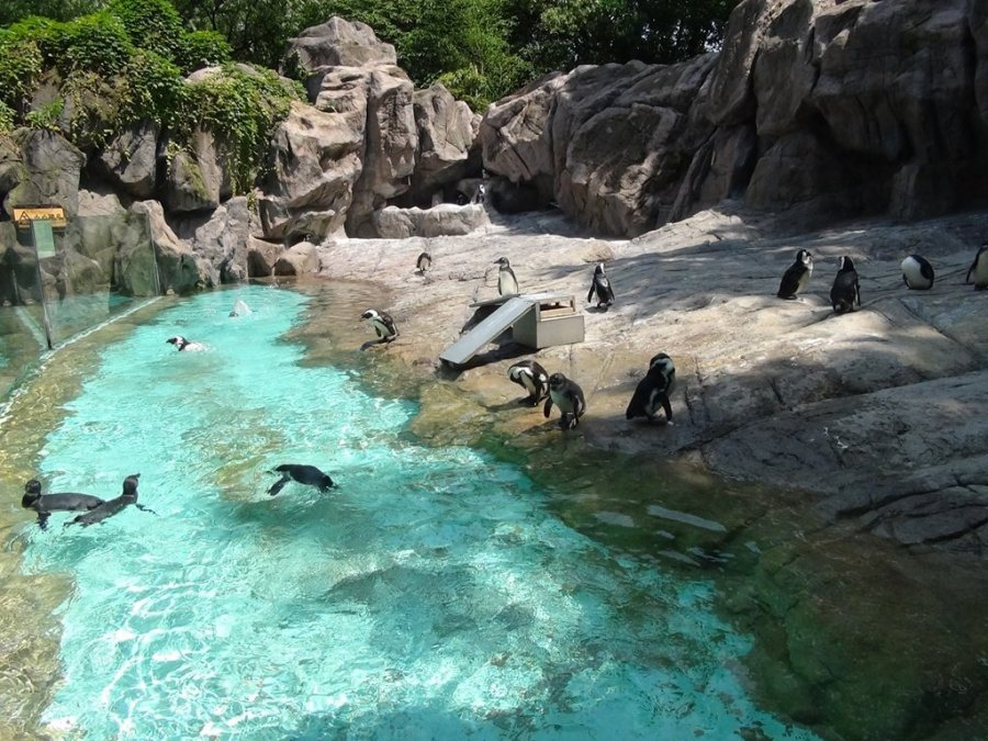 上海动物园旅游-上海动物园旅游景点-上海动物园图片