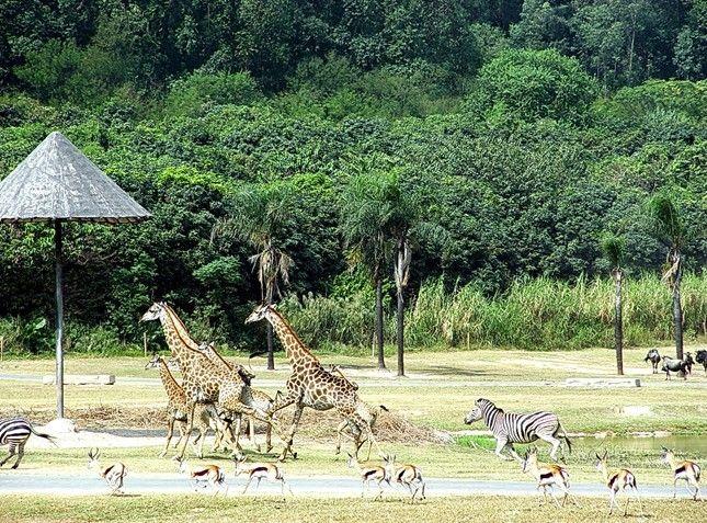 世界   香江野生动物世界美图