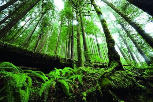 3种方法重新排列森林的节奏 别让树林跟棒子一样枯燥